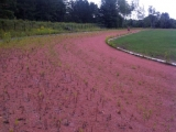 Running Track Pre-Renovation