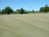 New Top Dressing
